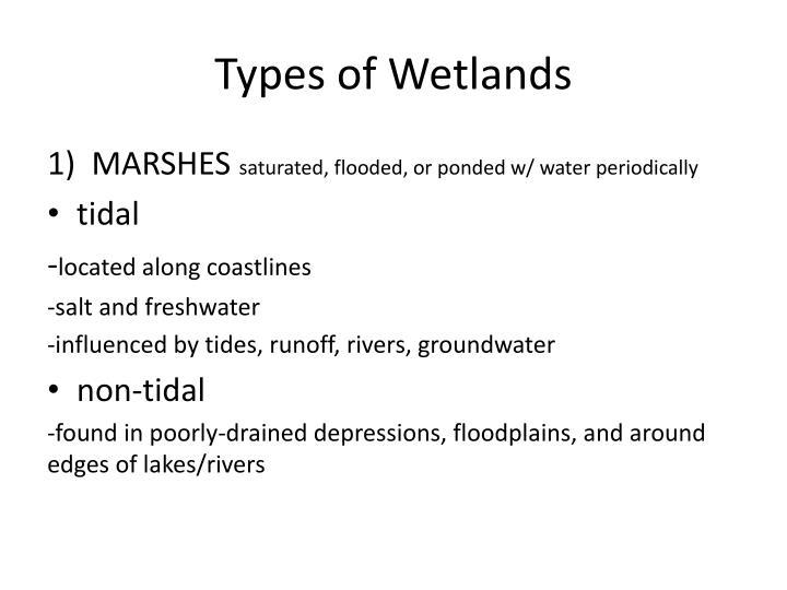 Types of Wetlands