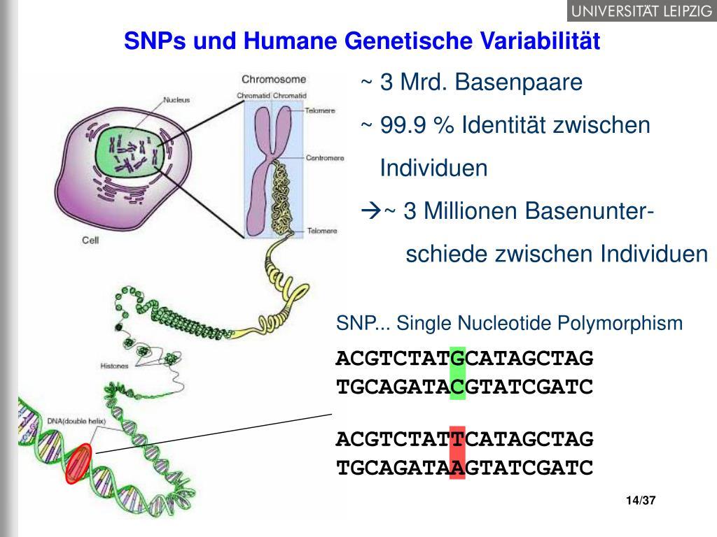 Genetische Variation
