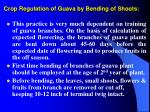 crop regulation of guava by bending of shoots