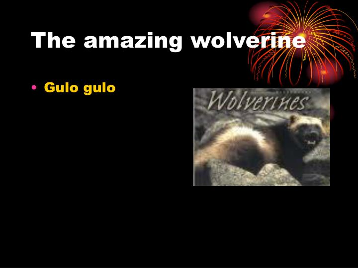 the amazing wolverine n.