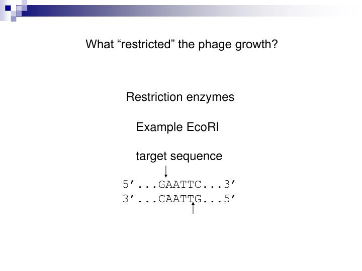 """What """"restricted"""" the phage growth?"""