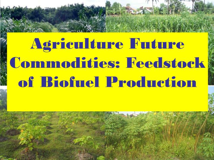 Agriculture Future Commodities: Feedstock of Biofuel Production