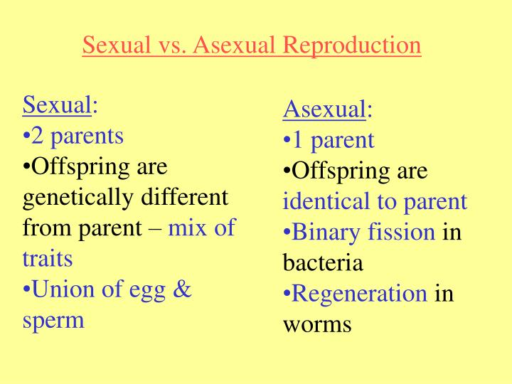 Chapter 11 meiosis and sexual reproduction