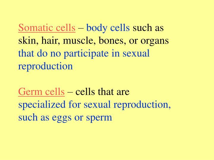 Somatic cells