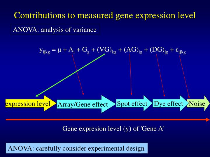 Contributions to measured gene expression level