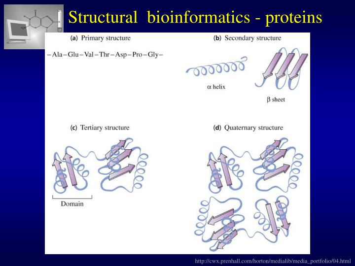 Structural  bioinformatics - proteins