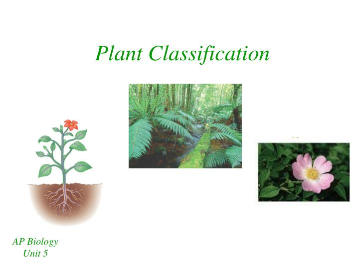 plant classification n.