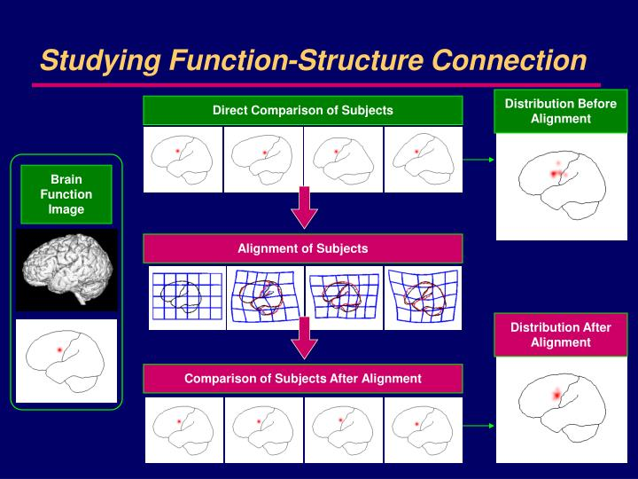 Studying function structure connection