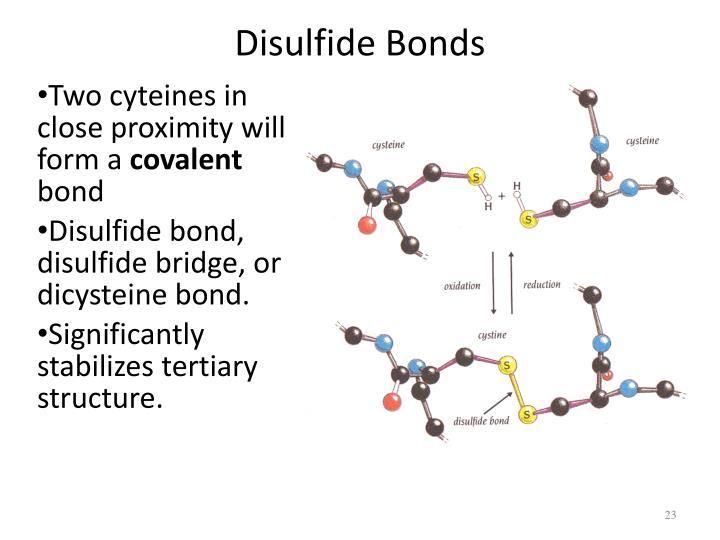 Disulfide Bonds