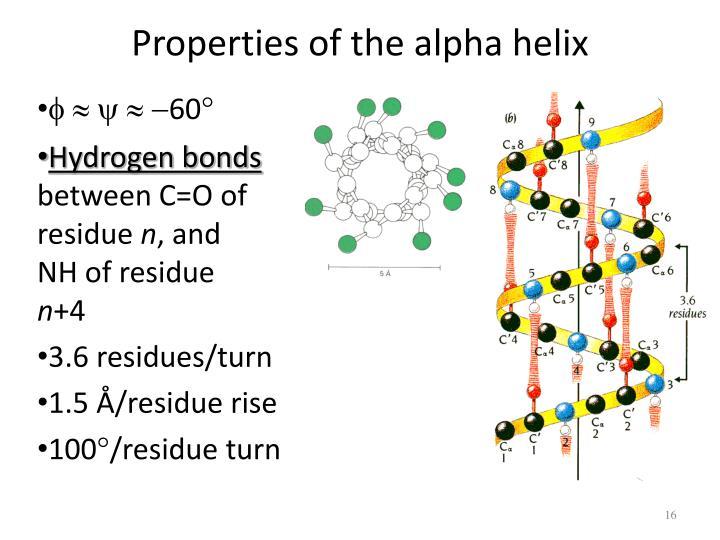 Properties of the alpha helix