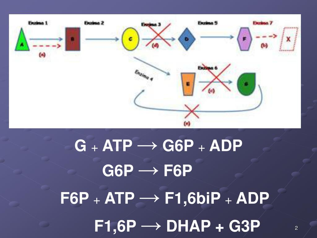 PPT - METABOLISMO PowerPoint Presentation, free download..