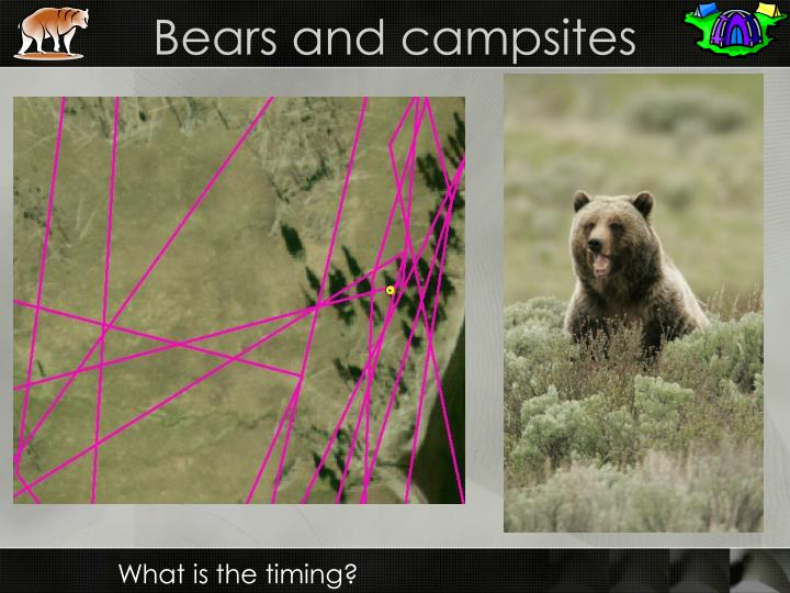 Bears and campsites
