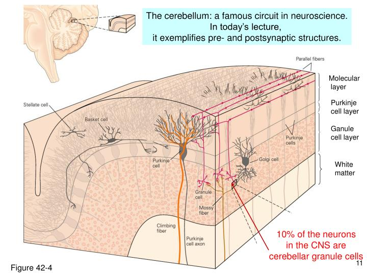 10% of the neurons