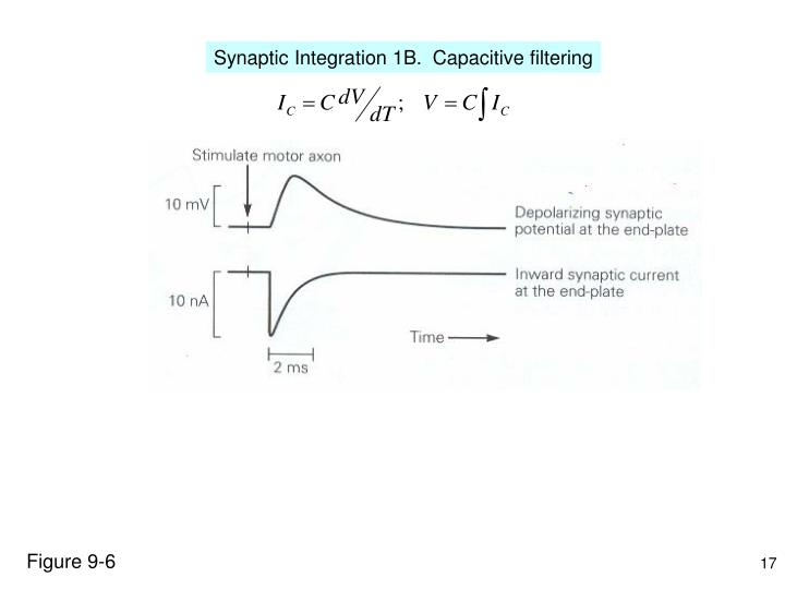 Synaptic Integration 1B.  Capacitive filtering