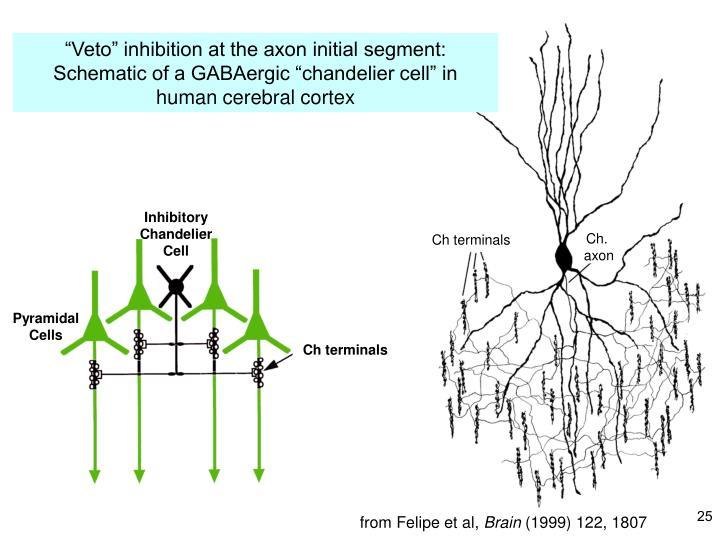 """Veto"" inhibition at the axon initial segment:"