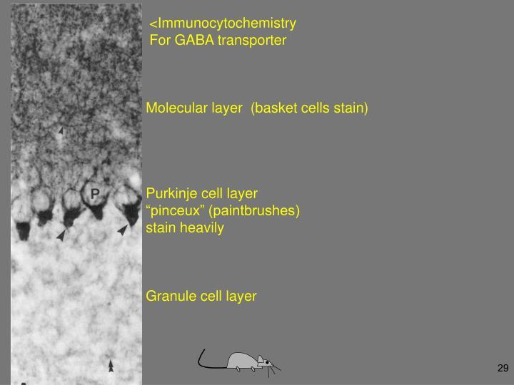 <Immunocytochemistry