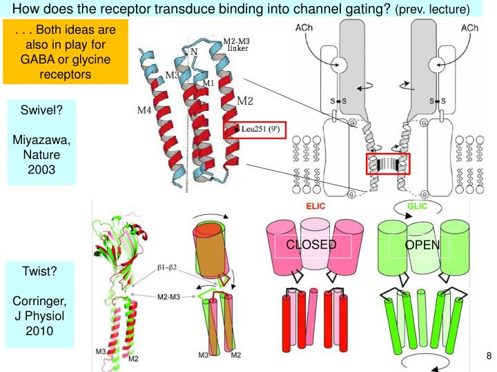 How does the receptor transduce binding into channel gating?