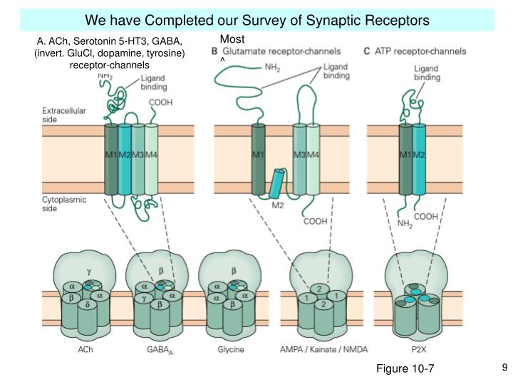 We have Completed our Survey of Synaptic Receptors