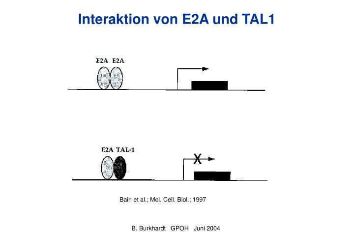 Interaktion von E2A und TAL1