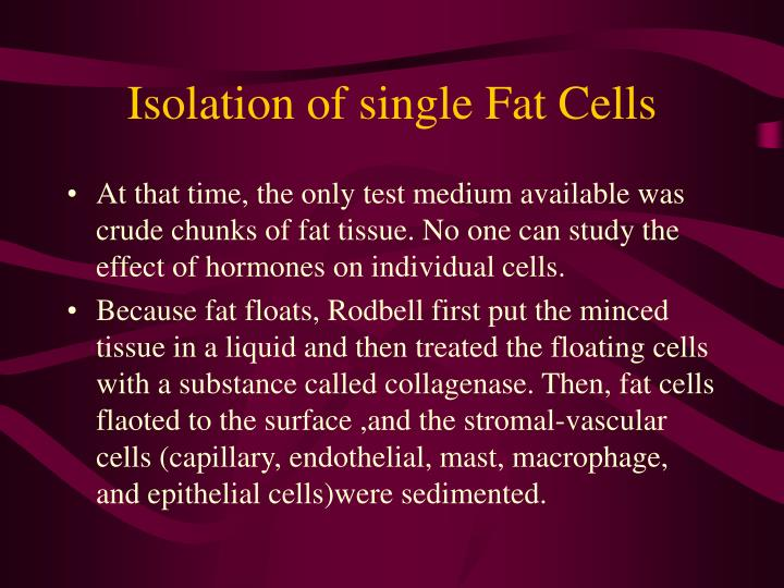 Isolation of single Fat Cells