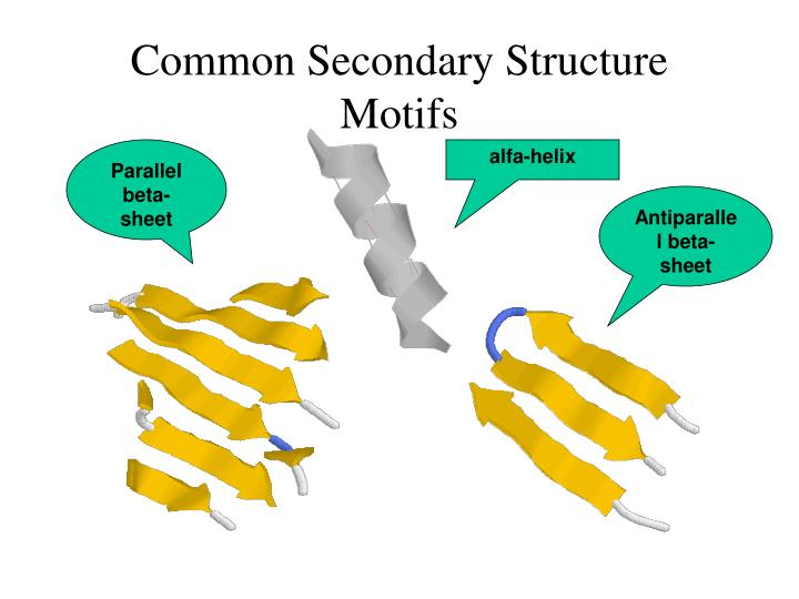 Common Secondary Structure Motifs