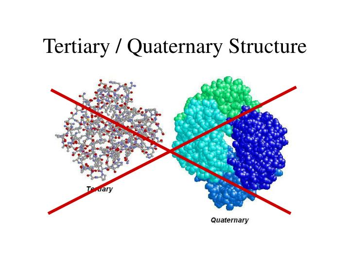 Tertiary / Quaternary Structure