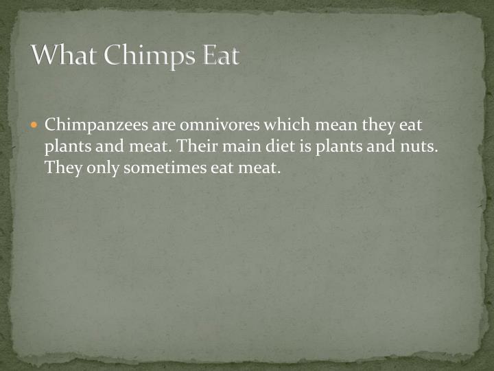 What Chimps Eat