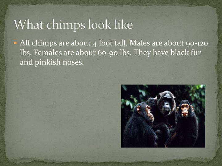 Sierra amp kenya black bad girls 1 1
