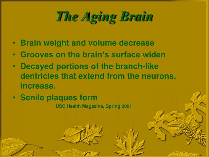 Brain weight and volume decrease
