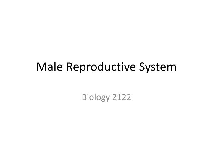 PPT - Male Reproductive System PowerPoint Presentation - ID:3589620