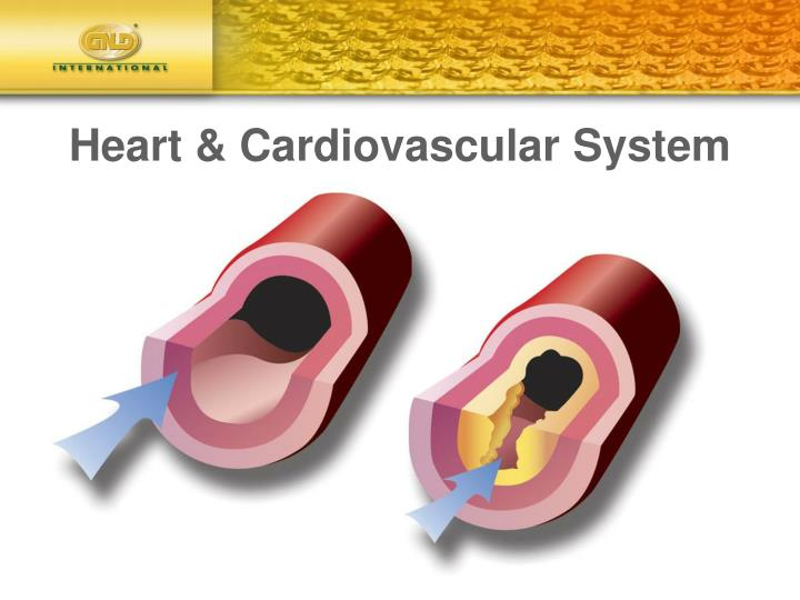 Heart & Cardiovascular System