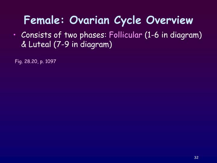 Female: Ovarian Cycle Overview