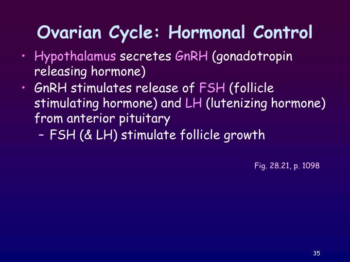 Ovarian Cycle: Hormonal Control