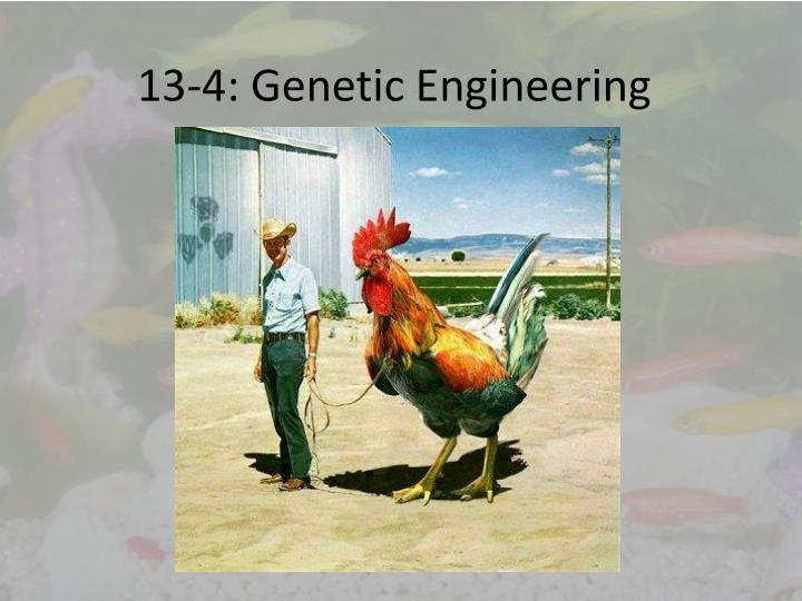 13 4 genetic engineering