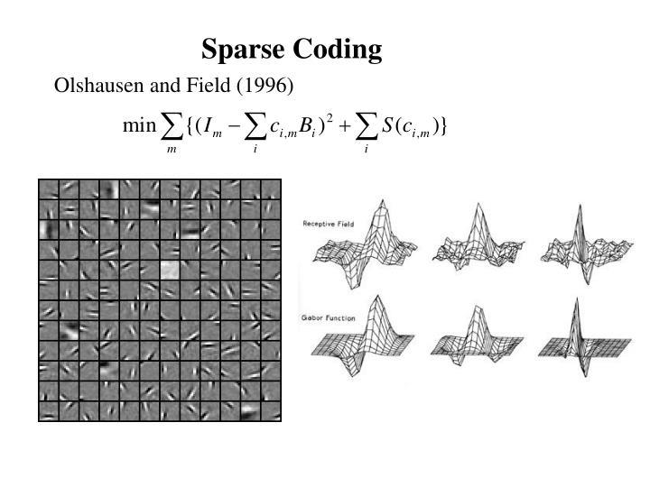 Sparse Coding