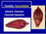fam lia fasciolidae
