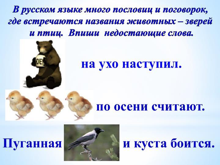 В русском языке много пословиц и поговорок,