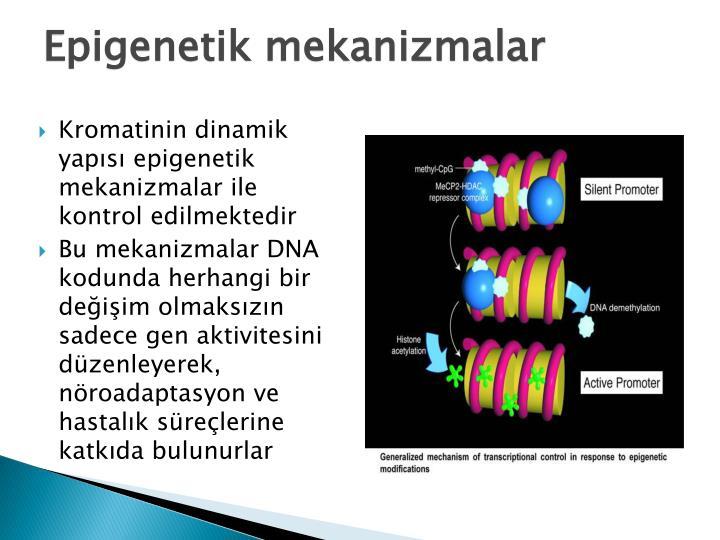 Epigenetik mekanizmalar