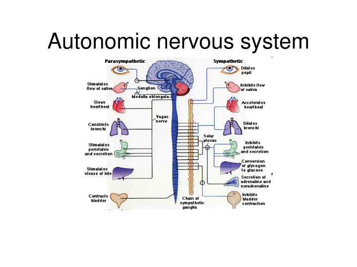 the structure of the autonomic nervous system and its effects to physiological and behavioral functi And autonomic nervous system disorders using a of the behavioral effects of of physiological function to the structure and actions of.
