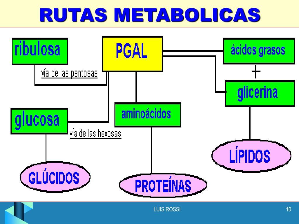 Susurró Metabolismo y nutricion secretos