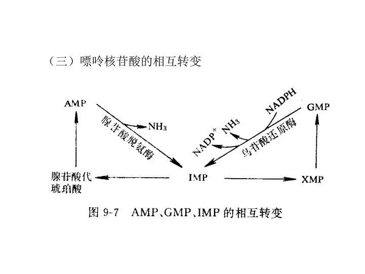 (三)嘌呤核苷酸的相互转变