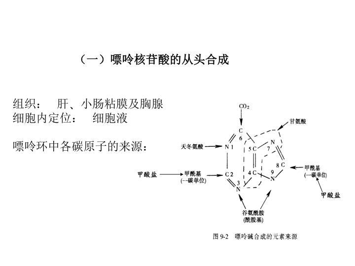 (一)嘌呤核苷酸的从头合成