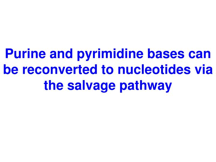 Purine and pyrimidine bases can be reconverted to nucleotides via the salvage pathway