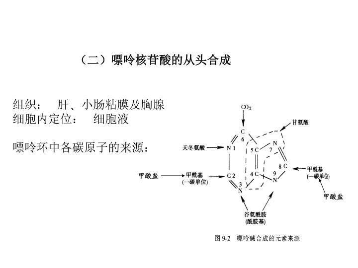 (二)嘌呤核苷酸的从头合成