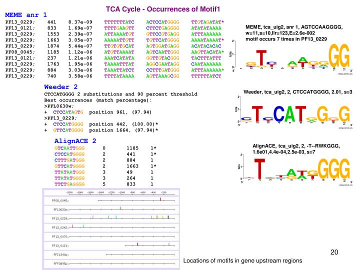 TCA Cycle - Occurrences of Motif1
