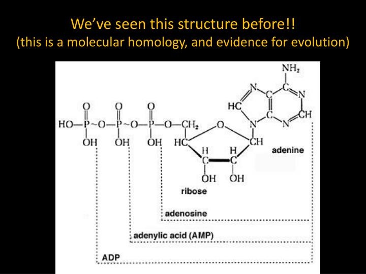 We've seen this structure before!!