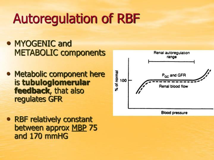Autoregulation of RBF