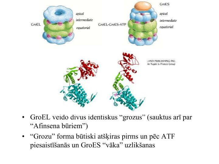 """GroEL veido divus identiskus """"grozus"""" (sauktus arī par """"Afinsena būriem"""")"""