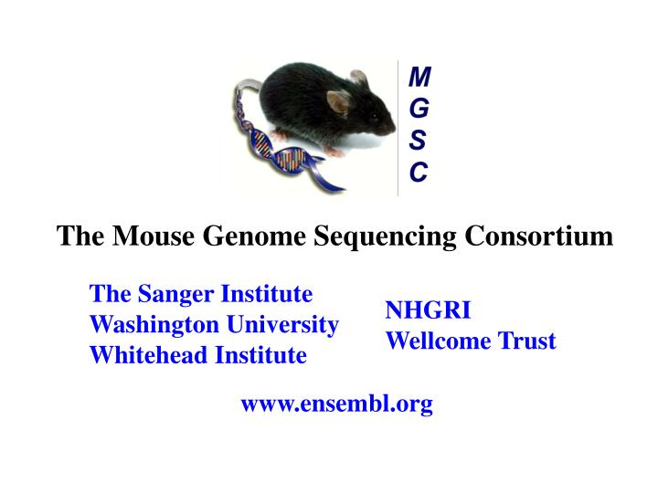 The Mouse Genome Sequencing Consortium