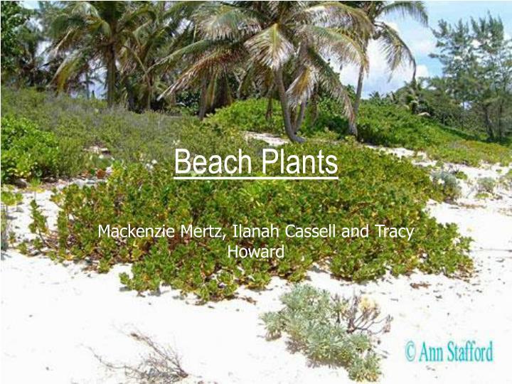 beach plants n.